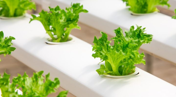Learn About Online Canadian Hydroponics Store Wholesale Hydroponic Supplies